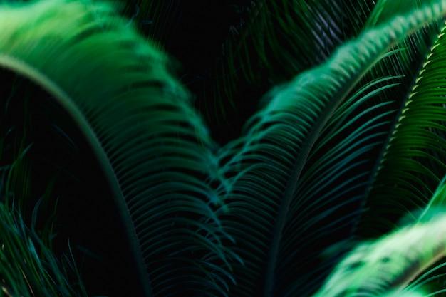 Macro de uma folha tropical verde Foto gratuita
