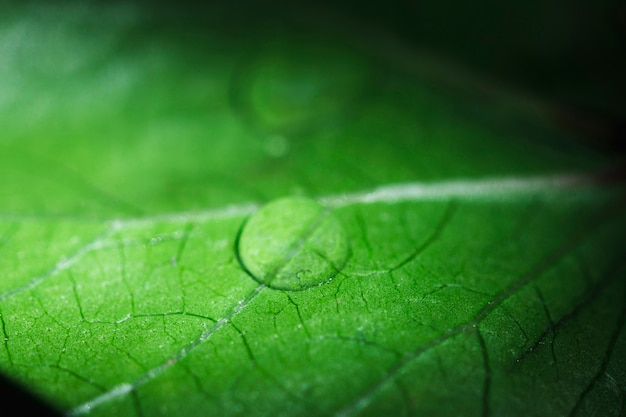 Macro de uma folha verde Foto gratuita
