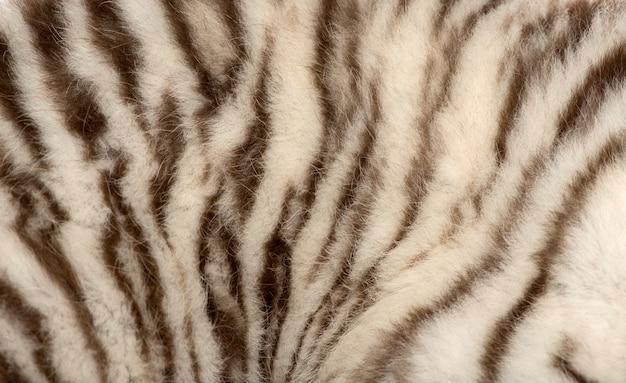 Macro de uma pele de tigre branco Foto Premium