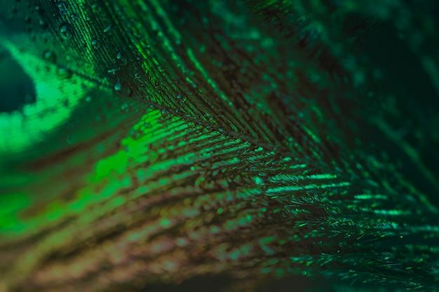 Macro extremo de uma pena de pavão verde Foto gratuita