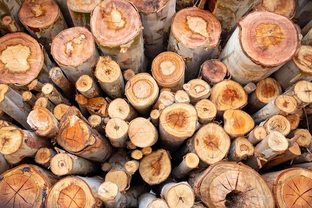 Madeira de eucalipto organizada em camadas, toras de madeira de eucalipto prontas para a indústria. Foto Premium