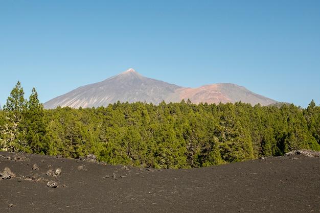 Madeiras verdes com montanha Foto gratuita