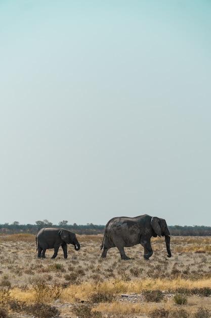 Mãe e bebê elefante caminhando em um campo denso Foto gratuita