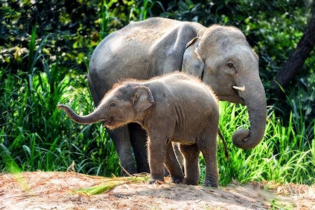 Mãe elefante com bebê Foto Premium