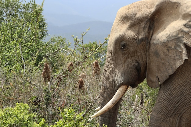 Magnífico elefante lamacento perto dos arbustos e plantas na selva Foto gratuita