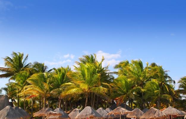 Maia riviera tropical sunroof palmeiras céu azul Foto Premium