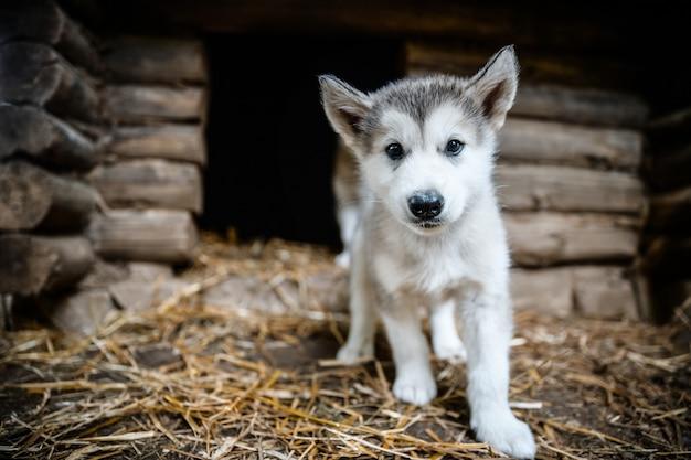 Cachorro olhando para frente em pátio