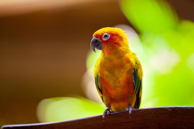 Maldivas, um pássaro papagaio Foto Premium
