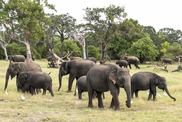Manada de elefantes em uma paisagem natura Foto Premium