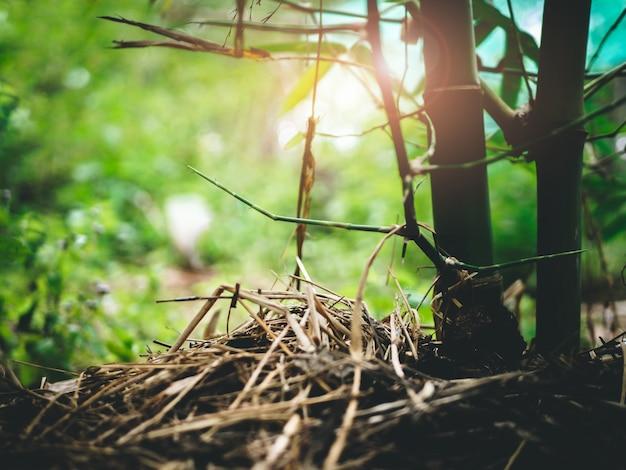 Maneira do agricultor de cultivar bambus naturais cobertos de palha Foto Premium