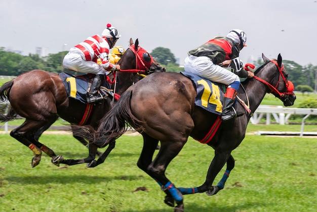 Mangueira de corrida Foto Premium