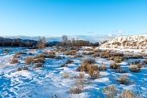 Manhã de inverno com neve e frio no parque nacional grand teton, wyoming Foto Premium