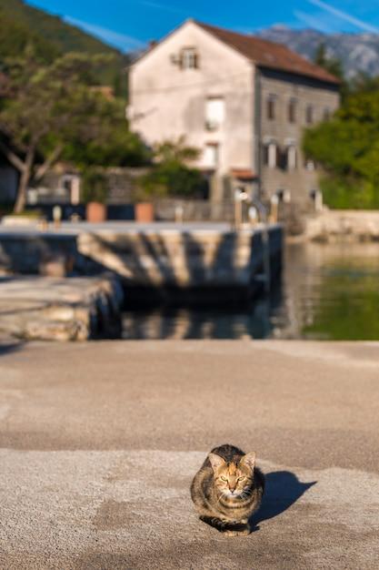 Manhã na baía de kotor. gato na baía de kotor. montenegro. Foto Premium