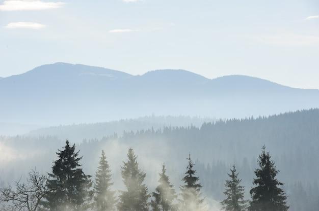 Manhã nas montanhas dos cárpatos Foto Premium