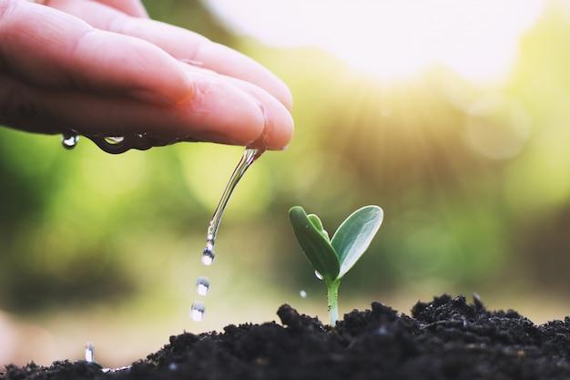 Mão, aguando, árvore, para, plantar, em, jardim Foto Premium
