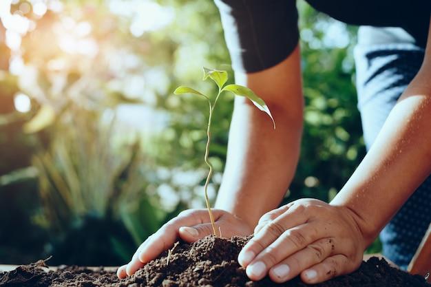 Mão de agricultor plantando árvores em gardren para salvar o mundo Foto Premium