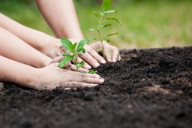 Resultado de imagem para crianças plantandos árvores