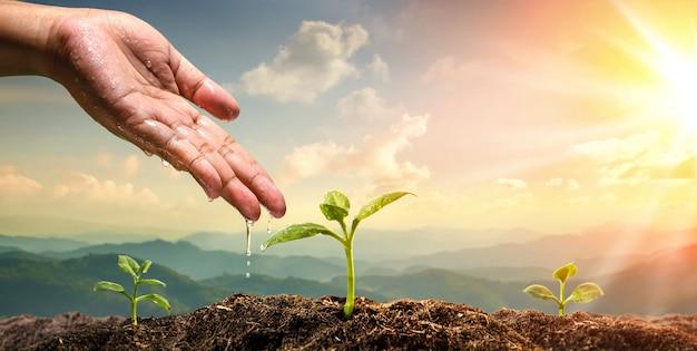 Mão de mulher rega a planta jovem em fundo de montanha natural Foto Premium