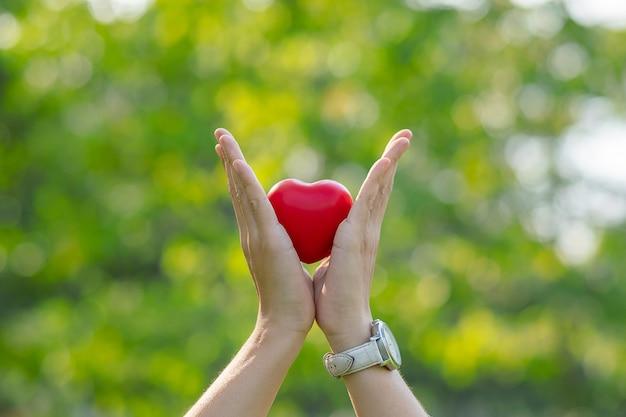 Mão de mulher segurando coração vermelho forma no fundo natural verde Foto Premium