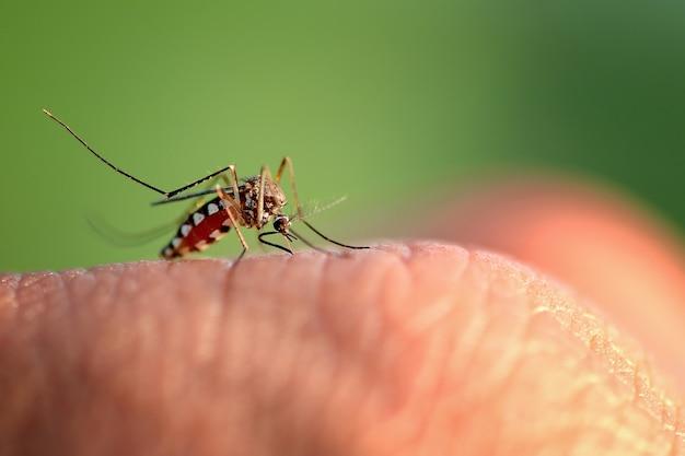 Mão de picada de mosquito Foto Premium