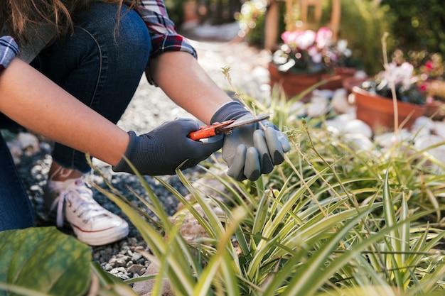 Mão do jardineiro feminino cortando a planta com tesouras de podar Foto gratuita