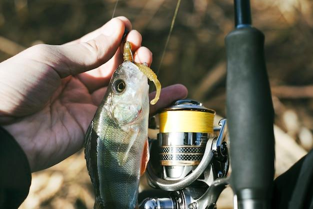 Mão do pescador com peixe fresco Foto gratuita