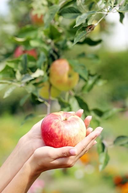 Mão e uma maçã Foto gratuita
