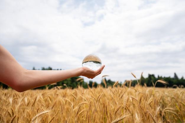 Mão feminina segurando uma bola de cristal acima de um campo de trigo dourado que amadurece no verão e reflete na esfera Foto Premium