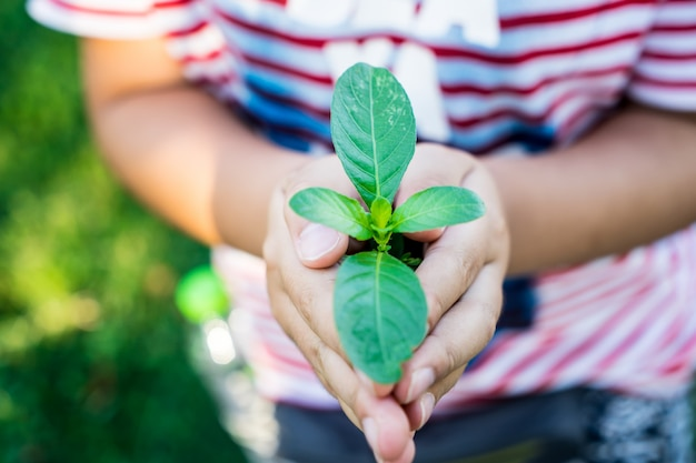 Mão garoto segurar árvores no conceito de ambiente Foto Premium