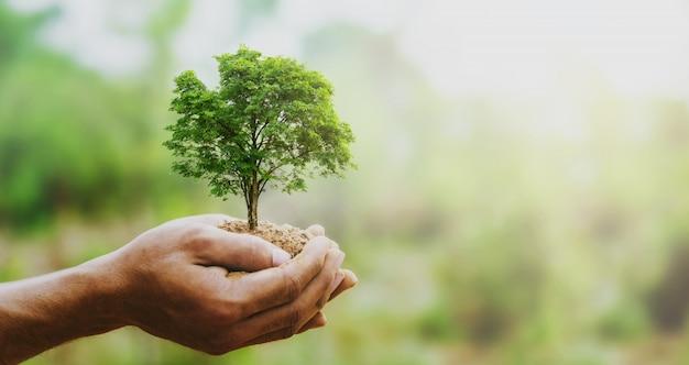 Mão holdig grande árvore crescendo em verde Foto Premium