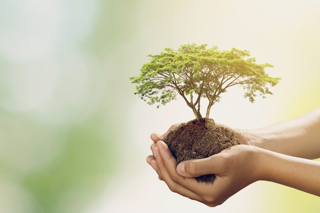 Mão holdig grande árvore crescendo sobre fundo verde Foto Premium