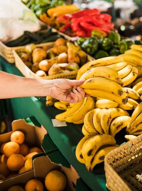 Mão humana, segurando, grupo, de, orgânica, fresco, banana, em, mercearia Foto gratuita