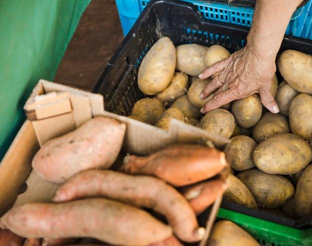Mão humana tomando batata de caixa de plástico na loja do mercado de mercearia Foto gratuita