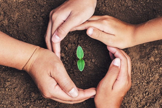 Mão, mater, e, proteção criança, verde, seedling, crescendo, em, solo Foto Premium