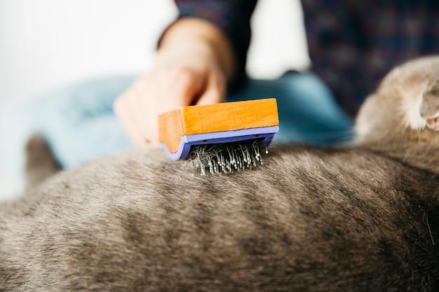 Mão penteando gato com escova Foto gratuita