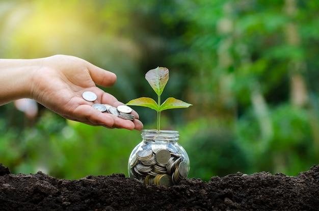 Mão, pôr, dinheiro, garrafa notas, árvore imagem, de, nota banco, com, planta, crescer, cima, para, busi Foto Premium