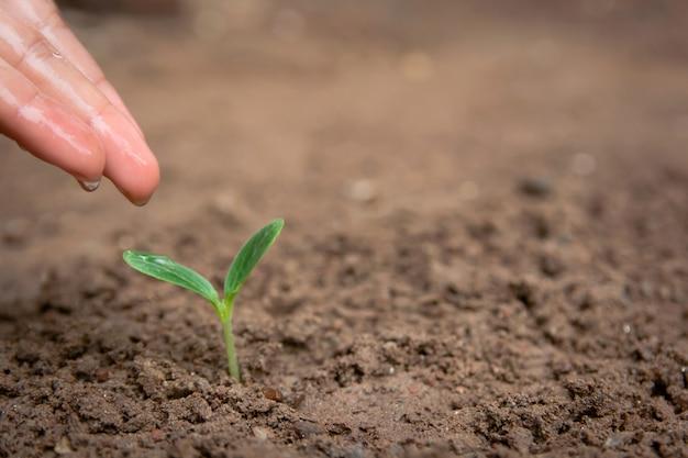 Mão que rega broto verde crescendo do solo com espaço de cópia Foto Premium