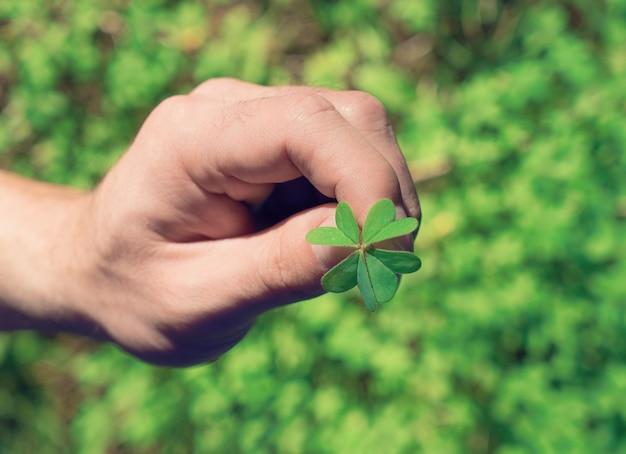 Mão segura, folha verde, de, trevo Foto Premium