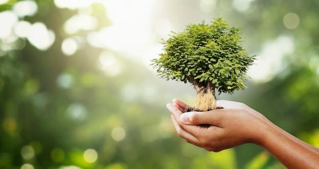 Mão segurando a árvore no borrão verde com o conceito de sunshine.eco Foto Premium