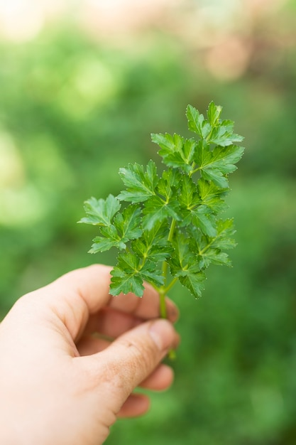 Mão segurando a salsa verde bonita Foto gratuita