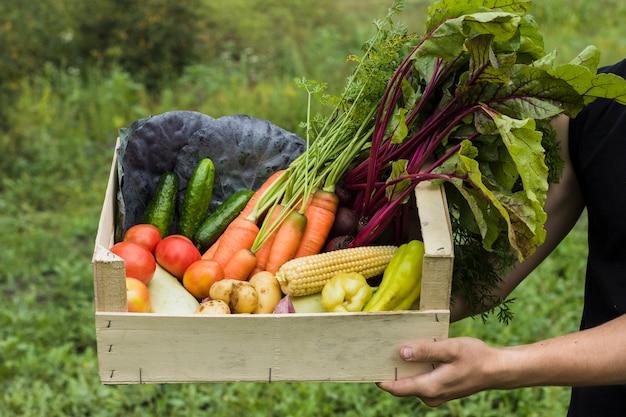 Mão, segurando, caixa madeira, cheio, de, legumes frescos Foto gratuita