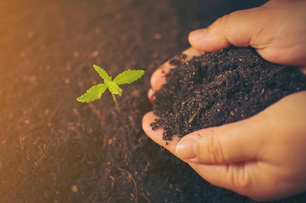 Mão segurando delicadamente o solo rico para suas plantas de maconha Foto Premium