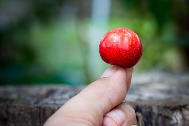 Mão, segurando, fruta tailandesa, cereja Foto Premium