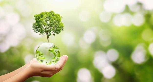 Mão segurando uma bola de globo de vidro com fundo de natureza verde e crescimento de árvore. conceito de eco ambiente Foto Premium
