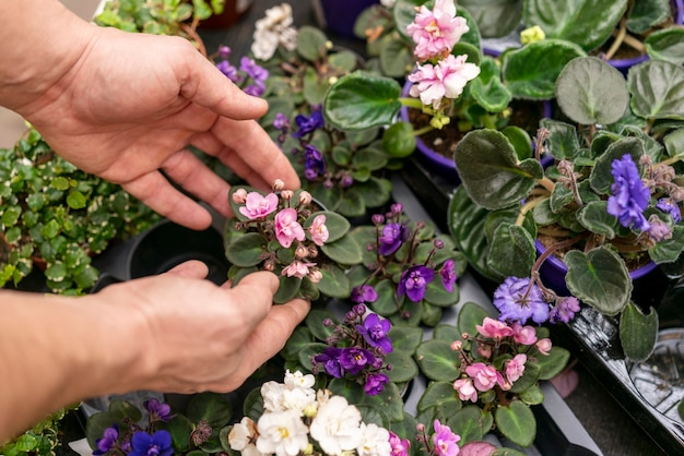 Mãos de close-up, organizando as plantas Foto gratuita