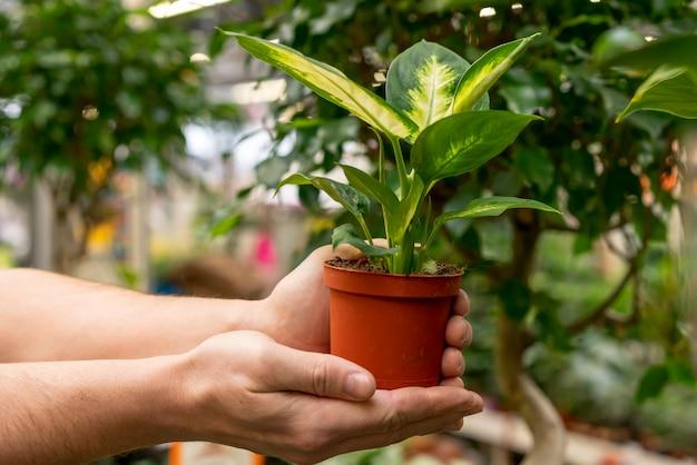 Mãos de close-up, segurando a planta da casa Foto gratuita