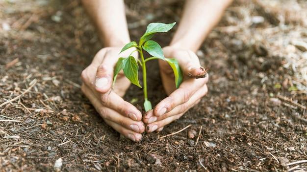 Mãos de colheita salvando o broto Foto gratuita