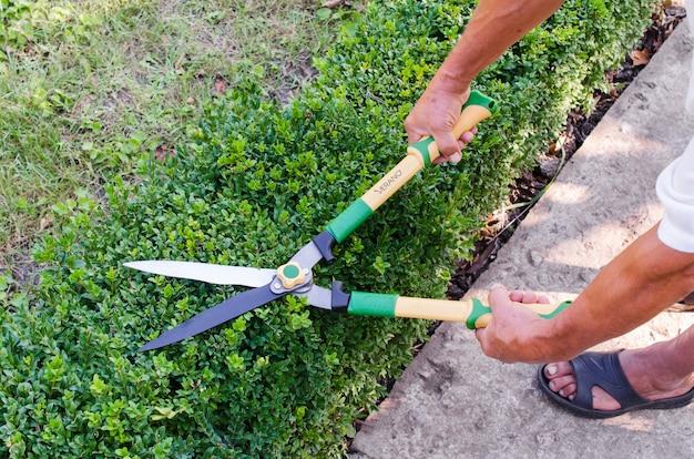 Mãos de homem corta galhos de arbusto de buxo com podador de jardim. buxus sempervirens. Foto Premium