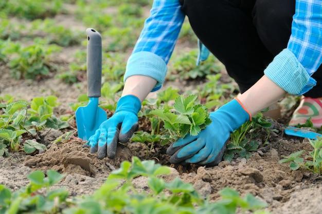 Mãos de mulher em luvas com ferramentas de jardim Foto Premium