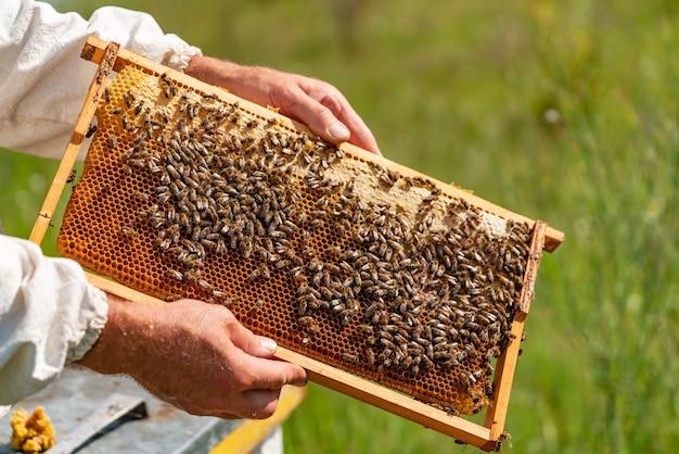Mãos de um homem mantém um quadro com favos de mel para as abelhas no jardim em casa Foto Premium